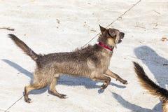 Moczy psa i bawić się w słonecznym dniu fotografia royalty free