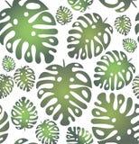 Modèle à la mode sans couture de vecteur avec les feuilles tropicales sur le fond trnsparent illustration de vecteur