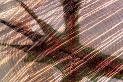 Modèle abstrait d'un tronc d'arbre Image stock