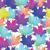Modèle automnal de feuilles de vecteur sans couture Abrégé sur feuille d'érable Photographie stock libre de droits