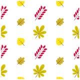 Modèle Autumn Leaf Fall Colorful Photos libres de droits