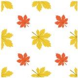 Modèle Autumn Leaf Fall Maple Photos stock