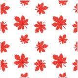 Modèle Autumn Leaf Fall Maple Diagonal Photos libres de droits