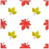 Modèle Autumn Leaf Fall Maple et feuille Photo stock