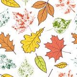 Modèle avec des feuilles d'automne Images libres de droits