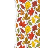Modèle avec des feuilles d'automne Image stock