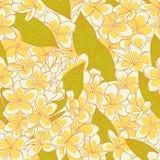 Modèle avec des fleurs de plumeria image stock