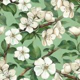 Modèle avec des fleurs de pomme d'aquarelle Image libre de droits