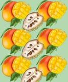 Modèle avec des fruits de mangue et de noyna illustration libre de droits