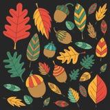 Modèle avec le tilleul de gland de Mapple de chêne de feuilles d'automne Image stock