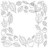 Modèle avec le tilleul de gland de Mapple de chêne de feuilles d'automne Photos stock