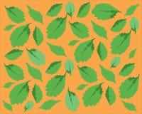 Modèle avec les feuilles vertes Photo stock