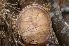 Mod?le blanc d'art sec en bois fait par nature image stock