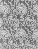 Modèle blanc Grey Background de dentelle de texture Photographie stock