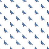 Modèle bleu de pigeon sans couture illustration stock