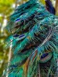 Modèle coloré d'apparence de queue de paon photos libres de droits
