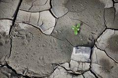 Modèle créé d'une terre criquée de photo Temps sec, sécheresse Photos stock