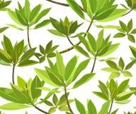 Modèle décoratif avec les feuilles vertes Photo stock