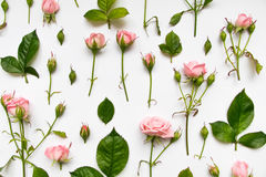 Modèle décoratif avec les roses, les feuilles et les bourgeons roses sur le fond blanc Configuration plate, vue supérieure Photographie stock