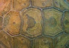 Modèle détaillé de coquille de tortue Images libres de droits