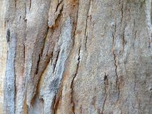 Modèle d'écorce d'arbre Image libre de droits