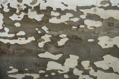 Modèle d'écorce d'arbre Photos libres de droits