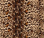 Modèle d'été de léopard pour des conceptions chaudes photos libres de droits