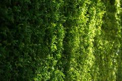 Modèle d'Abstarct des feuilles sur le lever de soleil de matin dans GA Photos libres de droits