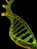 Modèle d'ADN Photographie stock