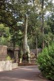 Modèle d'affichage d'Argentinosaurus dans le zoo de Perth Image stock