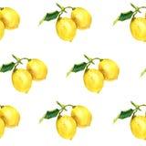 Modèle d'aquarelle avec des citrons Illustration botanique Image libre de droits