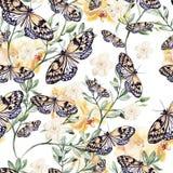 Modèle d'aquarelle avec des orchidées, des usines et des papillons Photographie stock