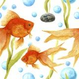 Modèle d'aquarelle avec l'aquarium Poisson rouge, pierre, algues et bulles d'air Illustration tirée par la main artistique Pour l Photographie stock libre de droits