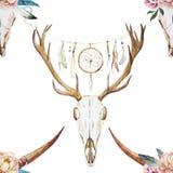 Modèle d'aquarelle avec la tête de cerfs communs Photo libre de droits