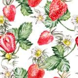 Modèle d'aquarelle avec les fraises mûres Photos stock