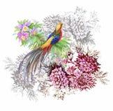 Modèle d'aquarelle de fleurs de jardin et d'oiseaux de faisan Images libres de droits