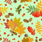 Modèle d'automne avec des glands, sorbe, feuilles multicolores Illustration de vecteur Photo stock