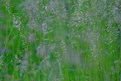 Modèle d'herbe Image stock