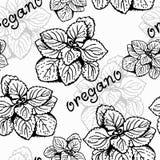 Modèle d'herbe d'origan illustration de vecteur