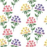 Modèle d'hortensia, fleurs mignonnes réglées Photographie stock