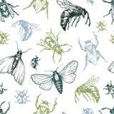 Modèle d'insectes illustration de vecteur