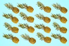 Modèle d'isolement d'ananas sur le fond vif lumineux de turquoise image stock