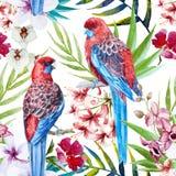 Modèle d'oiseau de Rosella illustration stock