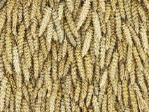 Modèle d'oreilles de blé Photographie stock libre de droits