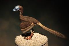 Modèle d'un oiseau préhistorique Image libre de droits