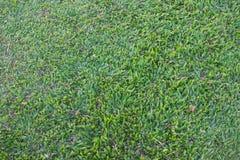 Modèle d'utilisation sur le terrain d'herbe verte comme fond, contexte, naturel images stock
