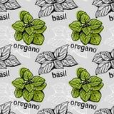 Modèle de Basil et d'origan illustration stock