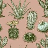 Modèle de cactus Photographie stock libre de droits