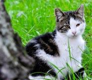 Modèle de chat Images stock