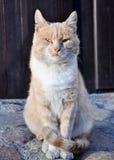 Modèle de chat Image stock